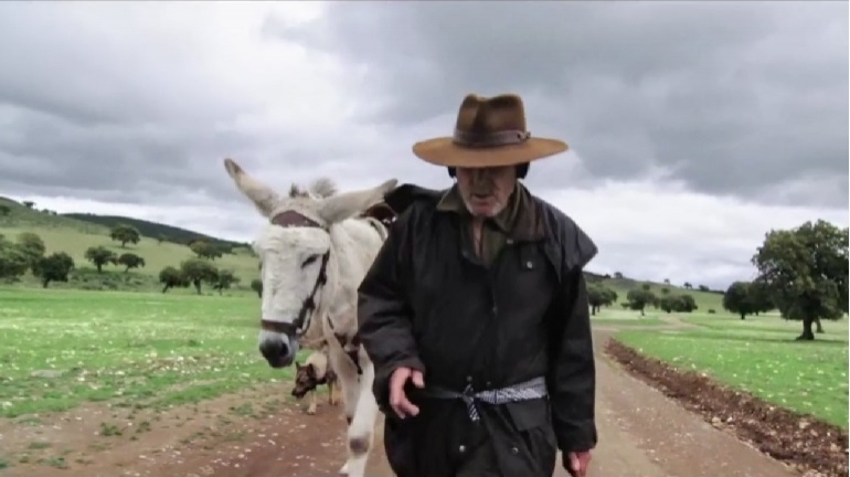 Donkeyote - Chico Pereira